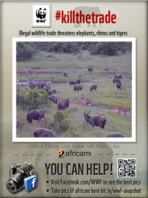 Large herd of animals on Africam