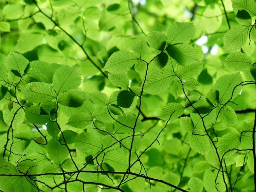 Leaves provide shade and a splash of color.  There are so many textures and shapes to choose from.
