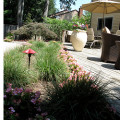 Ornamental Grasses bring Drama to your Garden Design