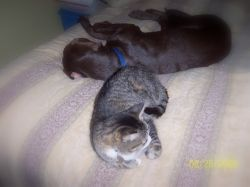 """The Kitty sez """"Make sure to come back and click the Link below to see my story."""""""