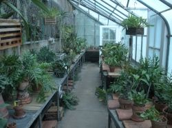 Thomas Edison Greenhouse