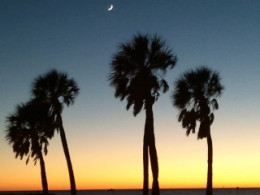 Four Palms at Sunset
