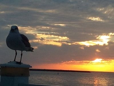 Seagull on Post at Sunset 1