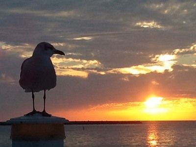 Seagull on Post at Sunset 2