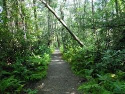 Rhododendron Path Pachaug Forest