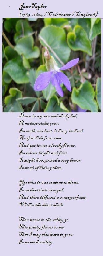 Violet Poem