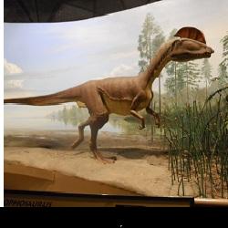 Dilophosaurus at Dinosaur State