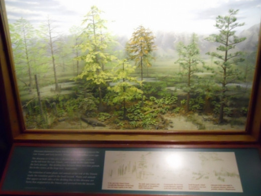 A diorama of the creatures who lived at this time