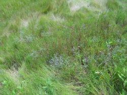wildflowers-bluff-point