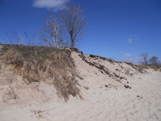 Dunes between the beach and the grassy picnic area