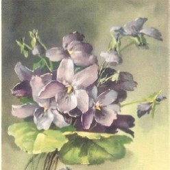 Vintage Alfred Mainzer Flower Postcards