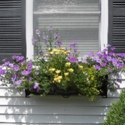 Best Flowers For a Super Sunny Window Box