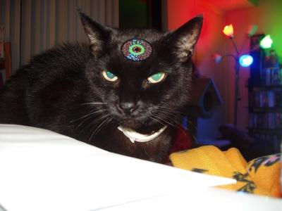 Fatbat the cat wearing his alien eye Halloween costume