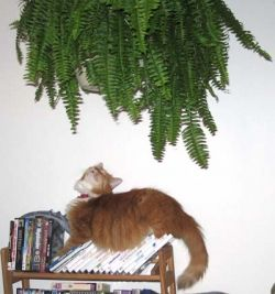 Rupert was watching the Fern of Doom day in and day out.