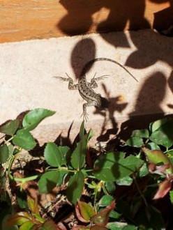 My Lizard Garden