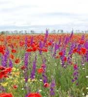 A field of colorful flowers in season