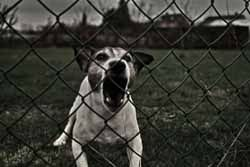 Avoid sleeping near homes with dogs. They'll know you are there and may make a noisy fuss about it.