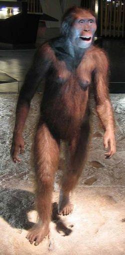 Australopithecus Afarensis Reconstruction