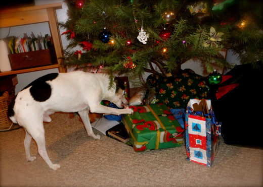 A few Christmas's ago, Buster's gift