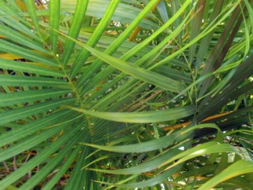 Green Tropical Plants