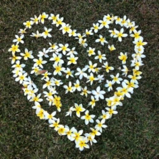 Plumeria Heart in Paradise