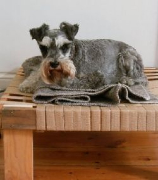 Raised DIY Dog Bed with Webbing