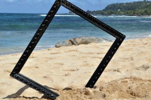 Hawaiian Monk Seal in Paradise