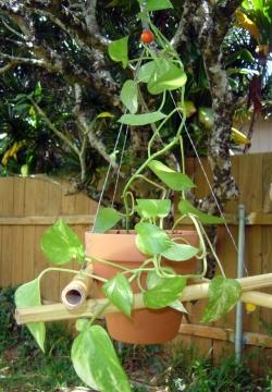 DIY Crafts Bamboo Outdoor Hanger Good Tutorial