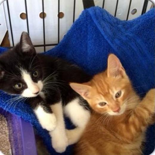 Two kittens sharing a hammock in Hawaii.