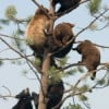 Black Bears in the Wild -- Are You Black Bear Aware?