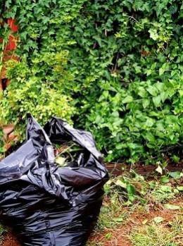 Yard waste in trash bag - a morgueFile Free Photo