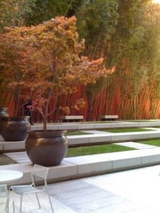 Bamboo garden, downtown San Francisco - Copyright L Kathryn Grace - All rights reserved