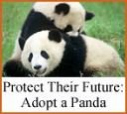 Protect their future: Adopt a panda - Courtesy World Wildlife Fund