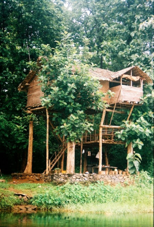 Bamboo tree house - a morgueFile free photo