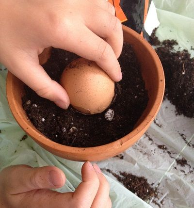 We placed one of the now-empty egg shells over the top of the plant to keep it from getting too dirty when we added the rest of the soil.