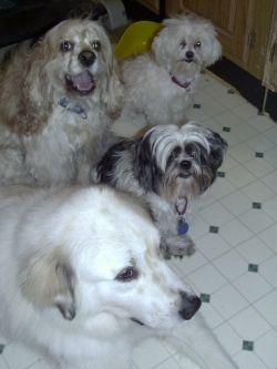 Waco, Riley, Teddy, and Freddie pose for photos