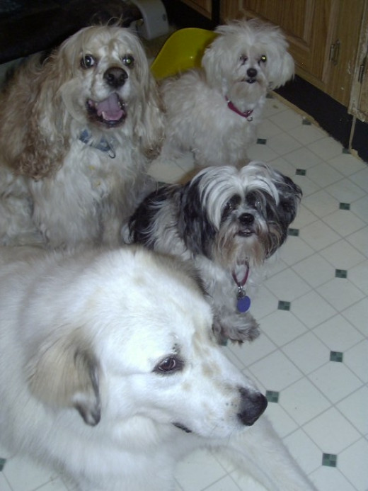 Waco, Riley, Teddy and Freddie pose for photo.