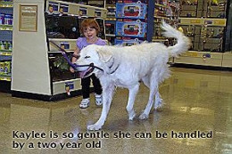 Kaylee - Happy, lively girl who wants to be adopted soon--even a 2 year old can lead her around the store. She's quiet and well-mannered.