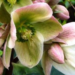 Winter Flowers For Your Garden