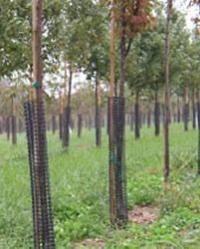 Tree Bark Protectors