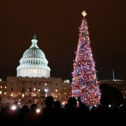 The Capitol Christmas Tree 2013