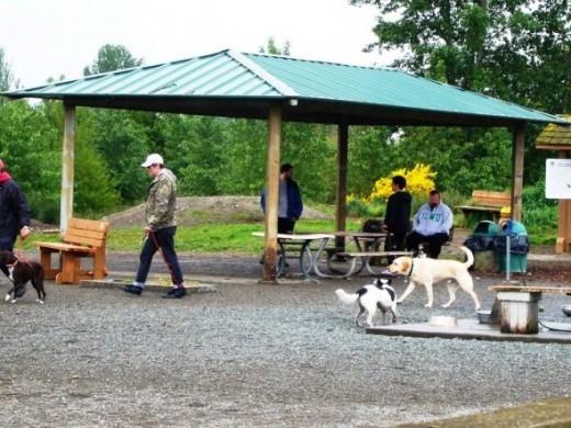 Shelter at the Magnuson Park Off-Leash Dog Area