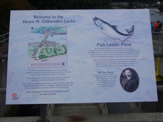 Ballard Locks Fish Ladder Sign