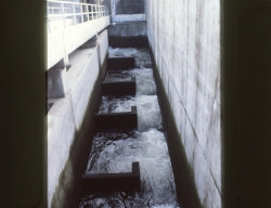 The fish ladder from above