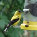 Backyard Birding - An Enjoyable Hobby