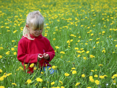 Girl sitting in a dandelion field.