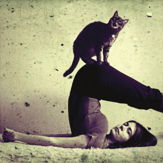 Halasana (Plow Pose) with cat