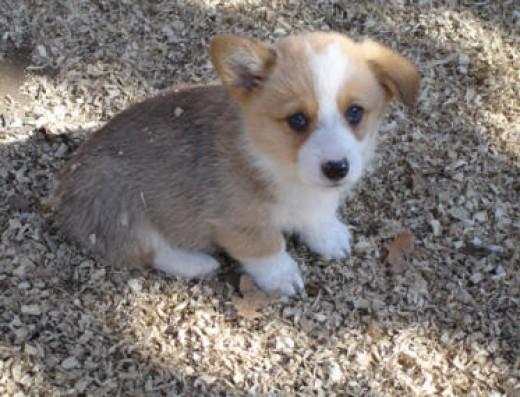Little Turbo (Tucker)