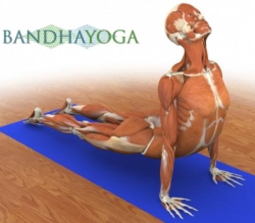 yoga anatomy books