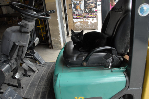 Another invisible cat, this one at the wheel.